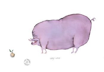 Funny Pig Cartoon Print - The Large White